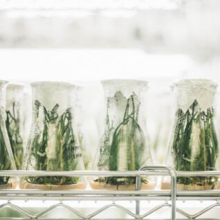 Ochrona prawna odmian roślin